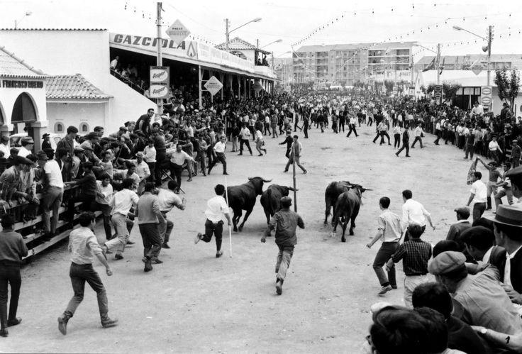 Uma concorrida largada de touros na manga no Campo Infante da Câmara, durante a realização da antiga feira Nacional de Agricultura/Feira do Ribatejo, ainda no planalto de Santarém, na década de 1960.   Foto da colecção de Evaristo Costa Fernandes
