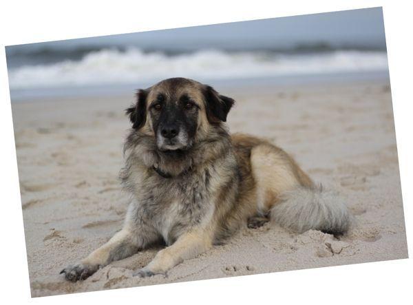 Paul auf Sylt - der Hund macht sich gut als Fotomodell