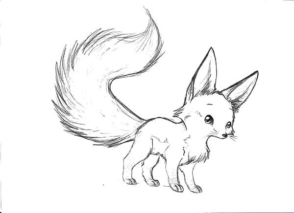 Long Tailed Desert Fox Coloring Pages Netart Fox Coloring Page Cute Fox Drawing Fox Sketch