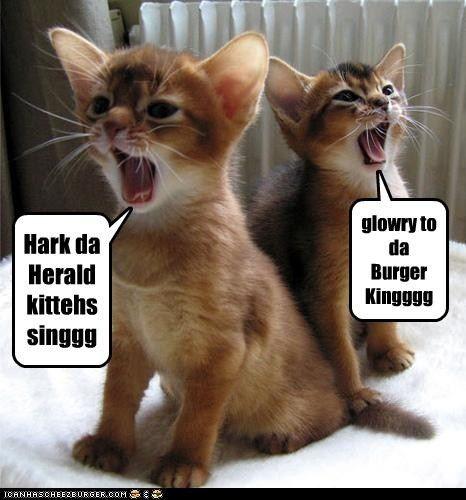 Hark Da Herald Kittehs Singgg Burgers Abyssinian And