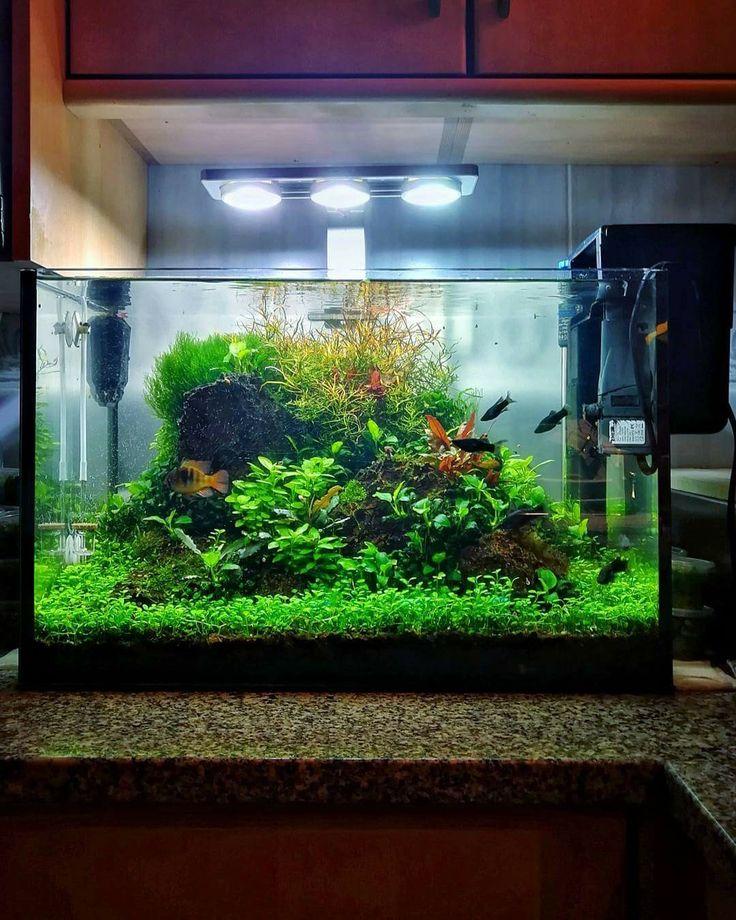 аквариумные хозяйства фото противном