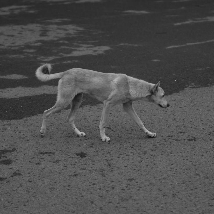 NABIL SABIO AZADI #NSAdiary #NSAbw #wild #dog #India #hunter