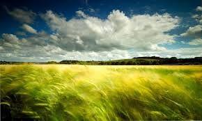Image result for landscape