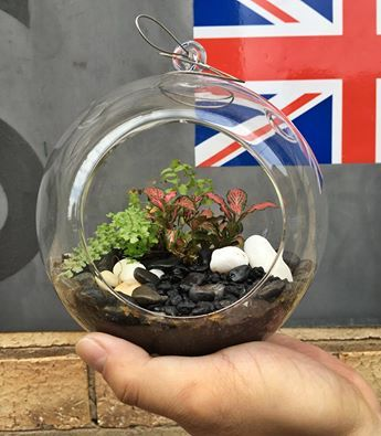 COMPETITION TIME// To win this terrarium, simply:  1. Like us on Facebook 2. Tag 3 friends in this photo  Easy! Winner will be drawn at random on Friday May 27th.