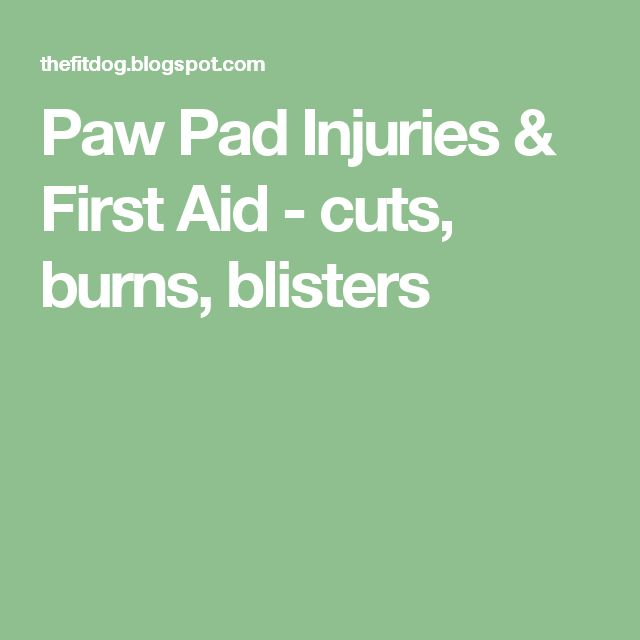 Paw Pad Injuries & First Aid - cuts, burns, blisters