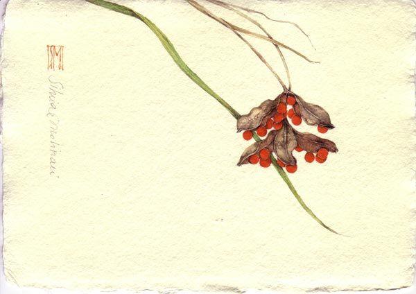Silvia Molinari / IRIS. acquerello su carta a mano, 14x21 cm circa, anno 2010