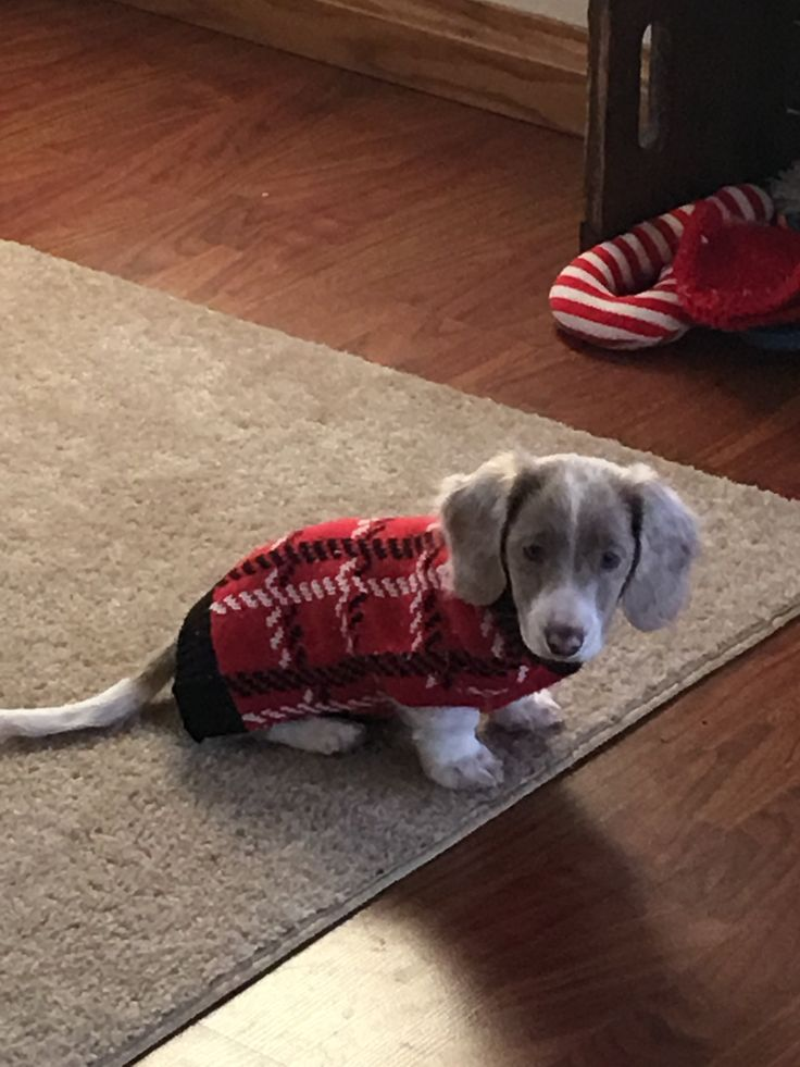 Max has on his Christmas sweater