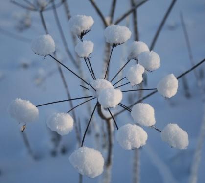dikke sneeuw