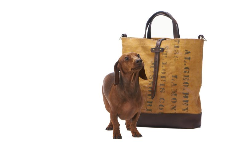 Darius the dachshund and his 8463  Male Bag!