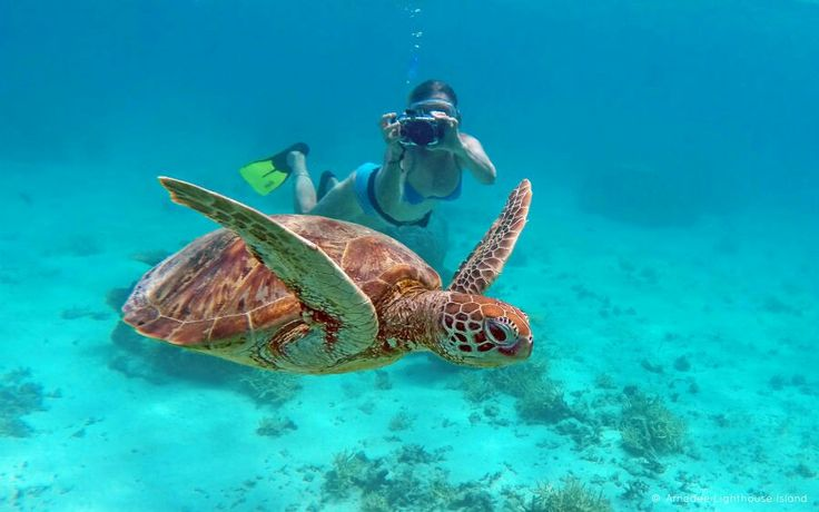 Where to swim with turtles in Noumea