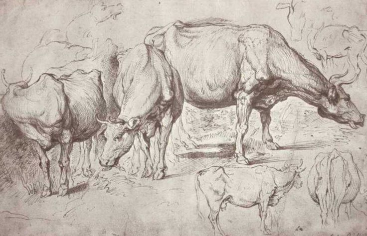 Cows, 1620  Peter Paul Rubens