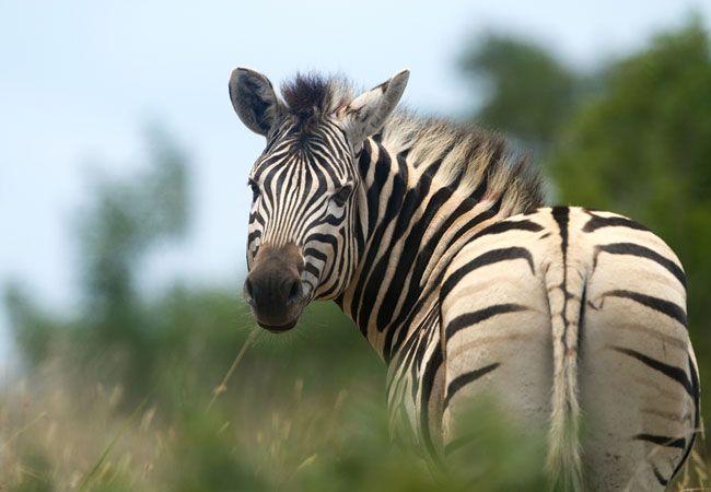 he Umgeni Valley Nature Reserve
