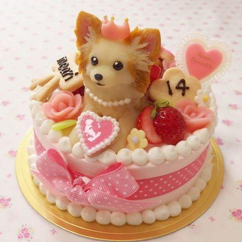 まさにお姫様💖王道のガーリーです😍👑🎀✨ 次はセーラちゃんの番🎵 またよろしくお願いします💞 ※最近アカウント名が思い出せずリンク張れなくてすみません💦 #chihuahuamania#chihuahuaholic#chihuahualover#cake#dogcake#dogsweets#decorationcake#birthdaycake#バースデーケーキ#誕生日ケーキ#オーダーメイドケーキ#犬用ケーキ#デコレーションケーキ#犬#わんこ#愛犬#立体ケーキ#チワワ#チワワラブ#チワワ大好き#ロングコートチワワ#チワワ女子#ちわわ#ガーリー