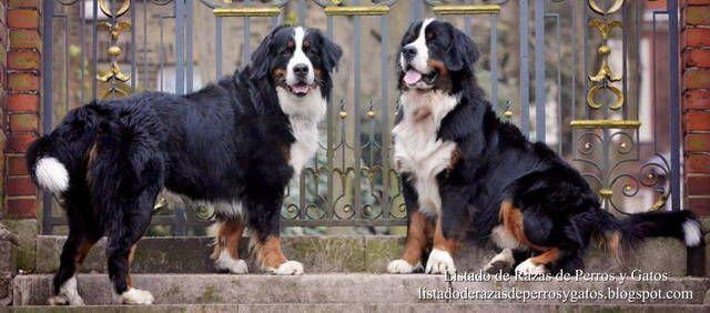 <<En el jardín, dos perros muy grandes me miraron me miraron sin interés>> (Cap. 14, p.23). Los Zabaleta tienen fotógrafos, paparazzi, y perros delante de su casa.