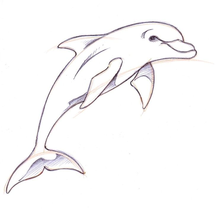 dolphin drawing this artist has real talent  description