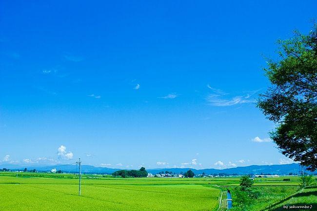 夏空の下の田園風景