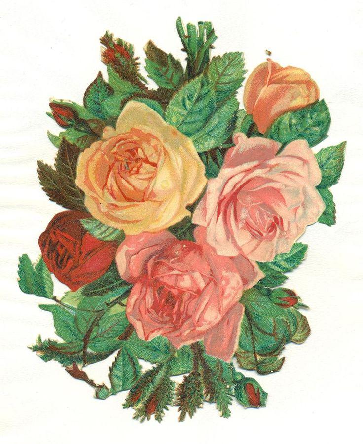 large victorian scrap  florabunda roses