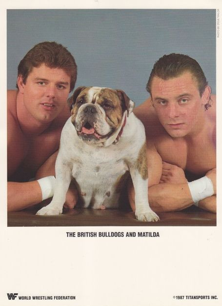 """Davey Boy Smith and Dynamite Kid, aka The British Bulldogs (with their bulldog, Mathilda). I didn't just love them -- I ADORED them!! I wrote many entries about them in my diary! (I think it was the presence of Mathilda that made them appeal to me so much; I felt very sorry for them after Bobby Heenan """"kidnapped"""" her.)"""