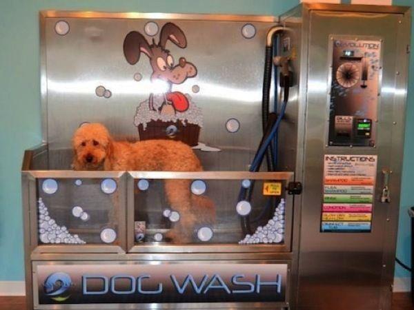 Best 25 Dog Wash Ideas On Pinterest