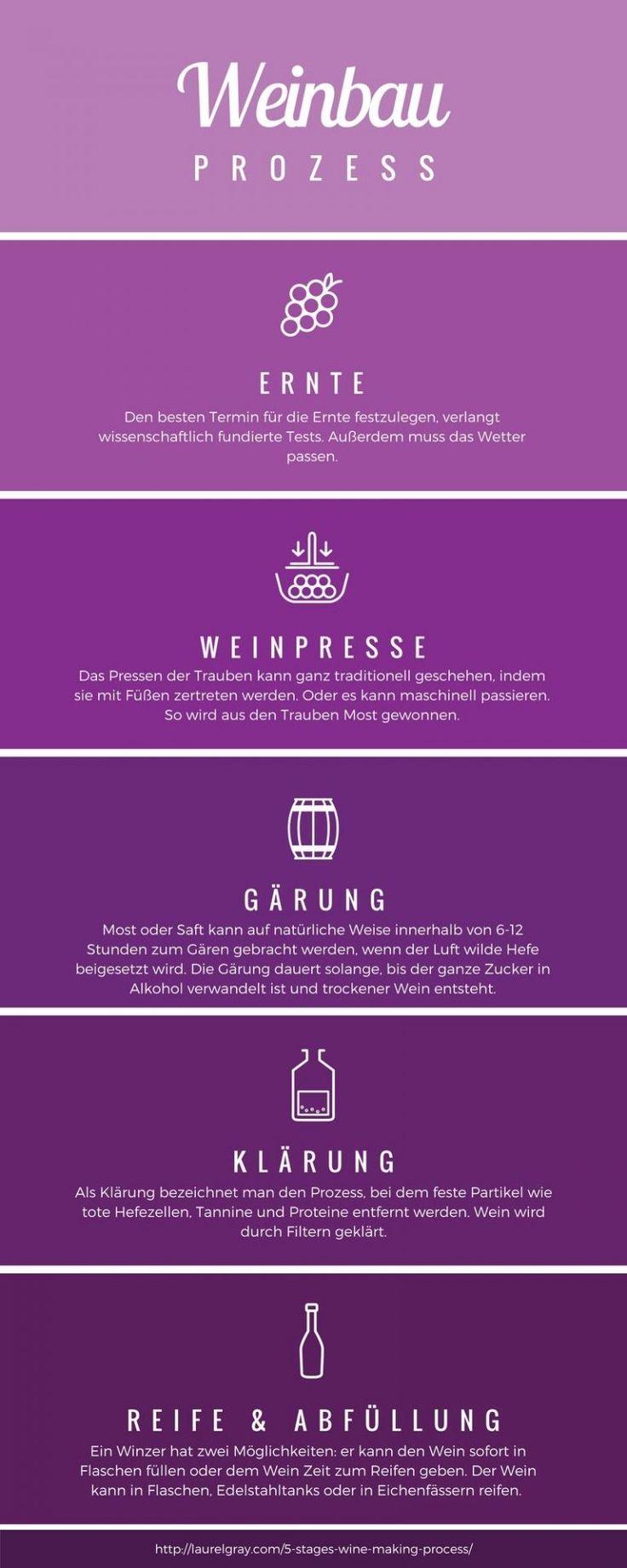 Weinbau Prozess für Slowenische Weine  #malvasier #wein #vipava #slowenien #weinbau #weinregion
