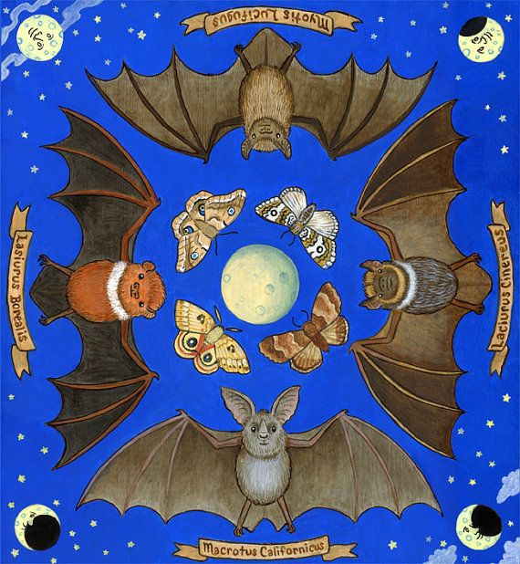 Bats Art Illustration by SepiaLupis, print sales benefit Bat Conservation International~