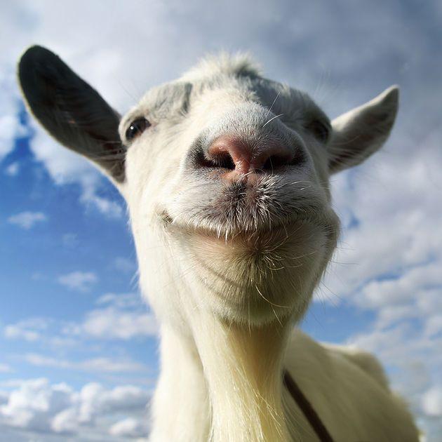 39 - Goat Simulator