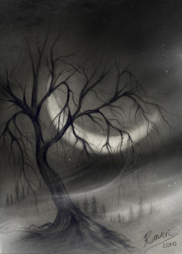 Tree in charcoal beautiful landscape drawings for inspiration http hative