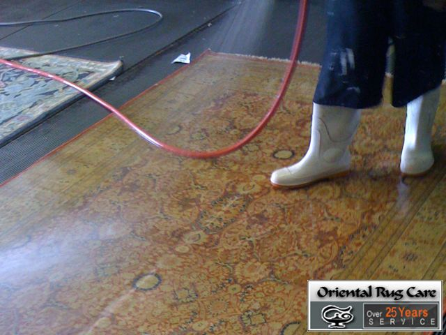 Dog Odor Removal Miami Beach