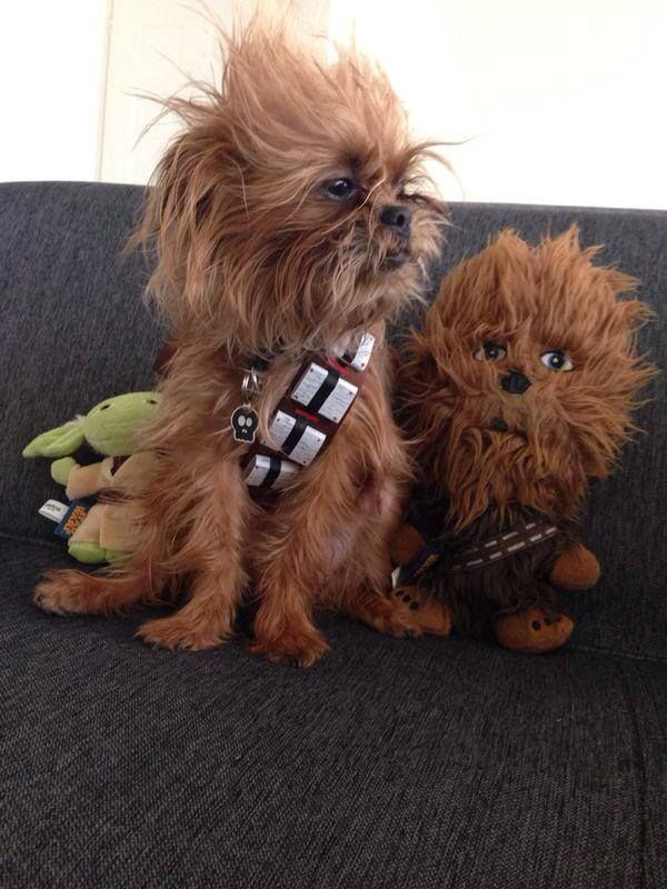 """My friend's dog won 3rd place on a Petco Star Wars contest."""