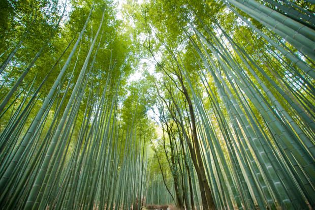Sagano Bamboo Forest, Japan: 15 Jaw-Dropping Places Worth Visiting