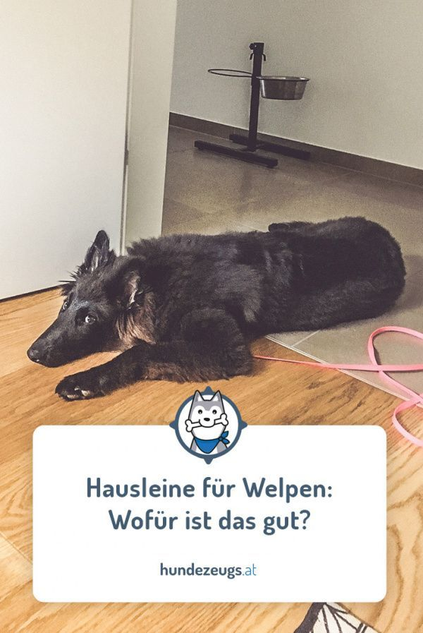 Hausleine Fur Welpen Wofur Ist Das Gut In 2020 Welpen Welpe Stubenrein Hundewelpen