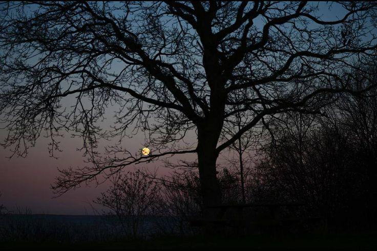 Oak by Isefjorden, Odsherred
