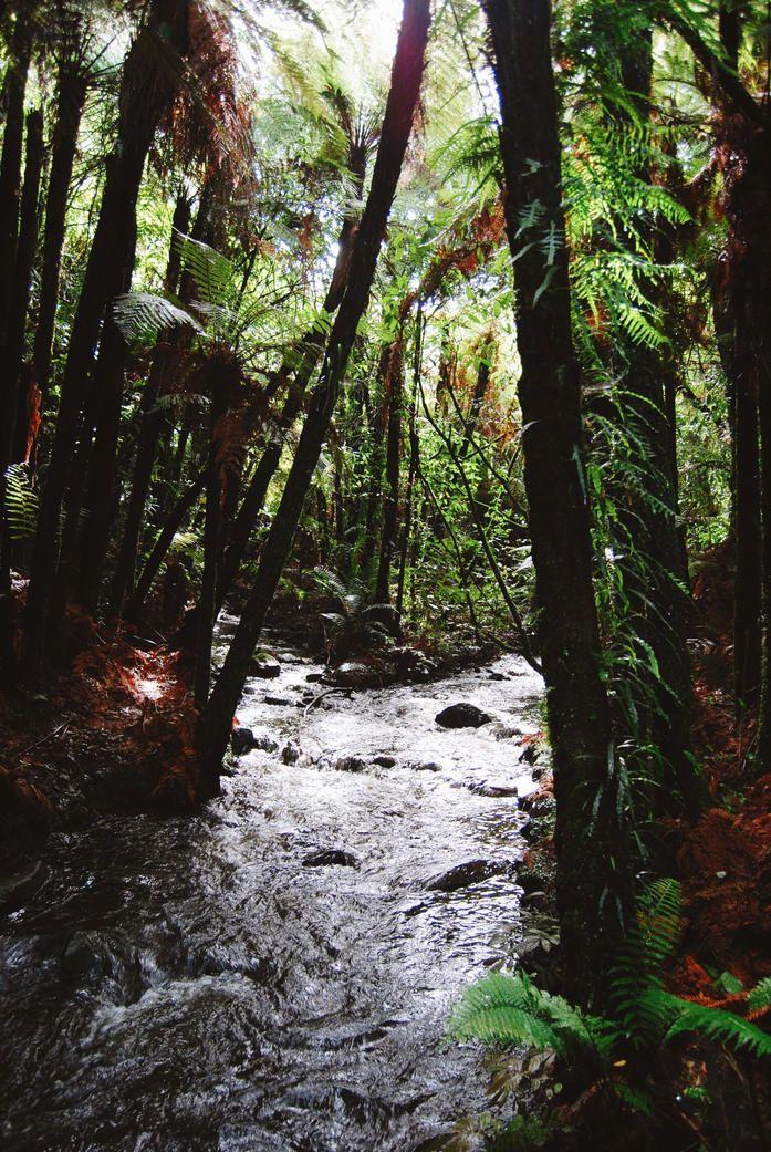 Bridal Veil Falls walkway, Waikato, New Zealand