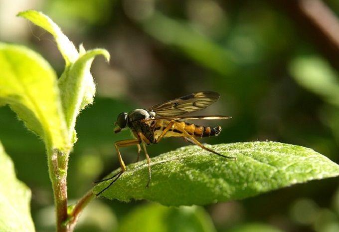17 meilleures images propos de insectes et parasites sur pinterest planters messages et - Comment se debarrasser des araignees a l exterieur ...