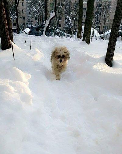 Bucurați-vă de zăpadă, bucurați-vă de viață - Joy of life, joy of snow