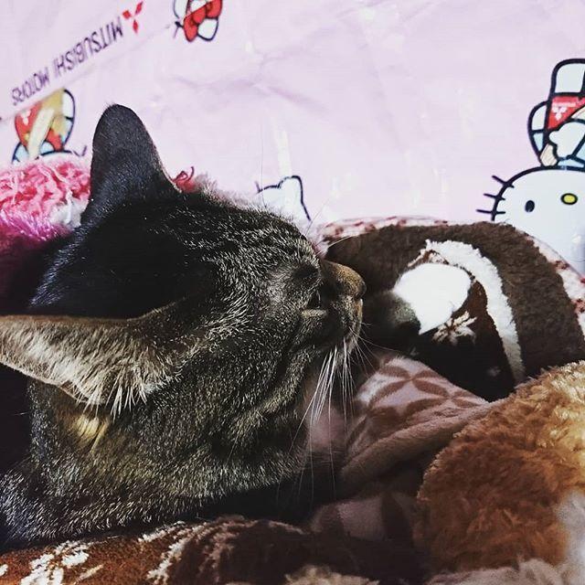 こんばんは❗😊いつもいいね👍ありがとうございます😄✨ 良く寝るなぁ~😆💕ミユ😆横顔もすごく可愛い😆💕お布団にもぐって寝ています😊💕 #可愛い猫 #愛猫 #猫好き #横顔可愛い #猫好きさんと繋がりたい
