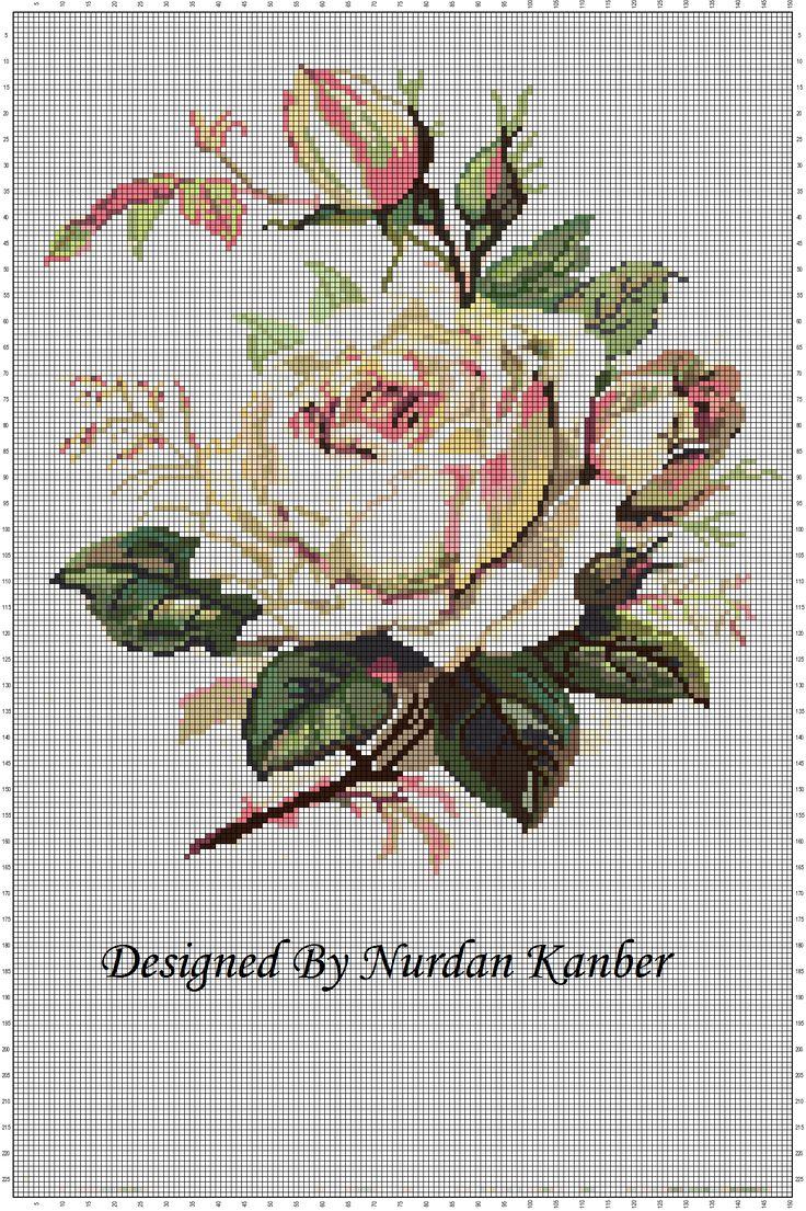 White Victorian Roses by Nurdan Kanber