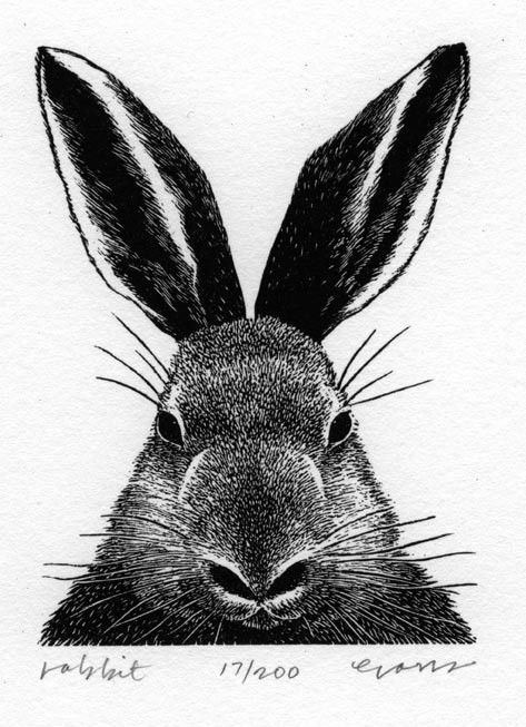 Rabbit wood engraving by Sea Dog Press via Etsy.