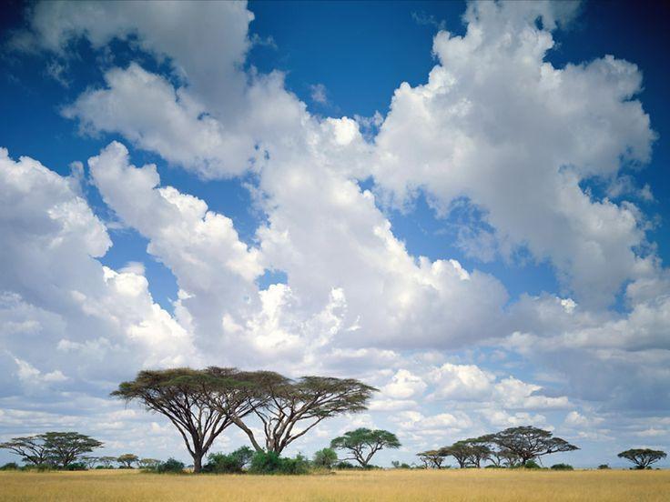 Sabana Kenia