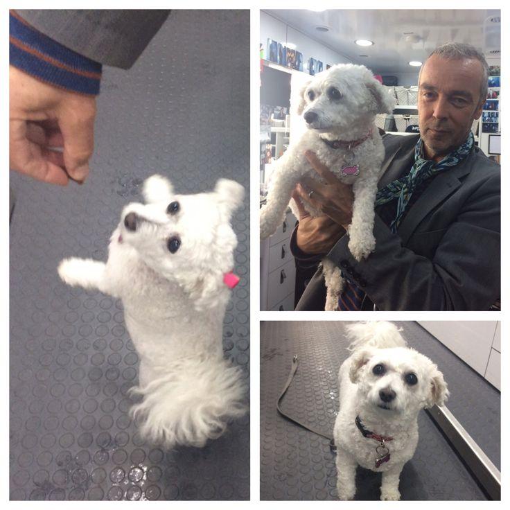 Welcome #AgentCoCo to @DogsOfShield1 #NewestRecruit @JohnHannah @AgentsofSHIELD 🐾🐶 ...