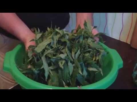 Как правильно и просто приготовить Иван чай, Копорский чай - YouTube