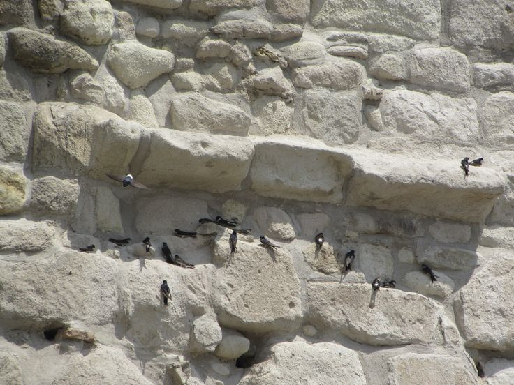 Eger's stronghold filled with birds