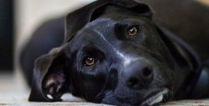 10 Signs You Like Dogs More Than People.