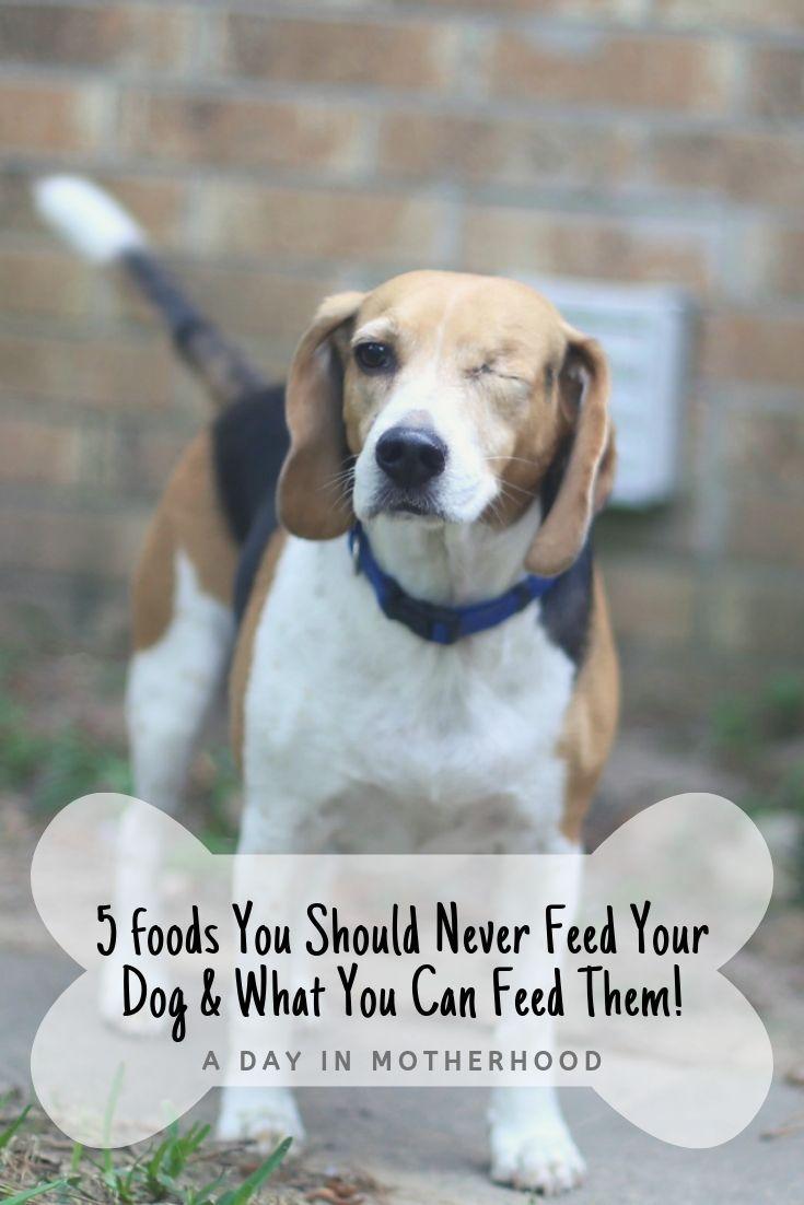 how much food should i feed my puppy calculator