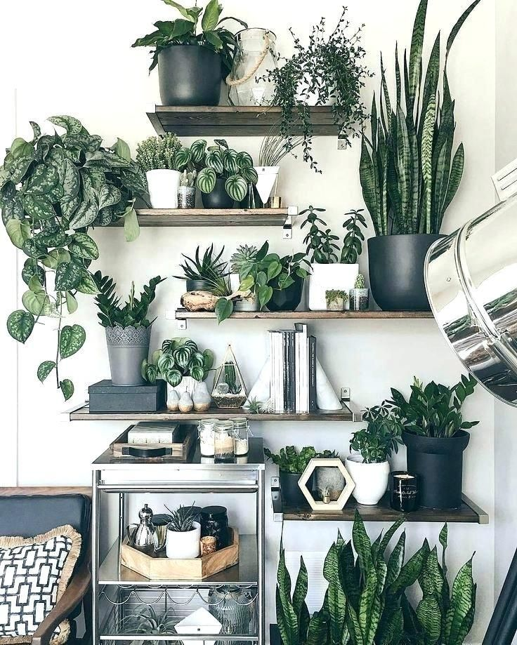 Best Plants For Living Room Plant Decoration Ideas On Decor Artificial
