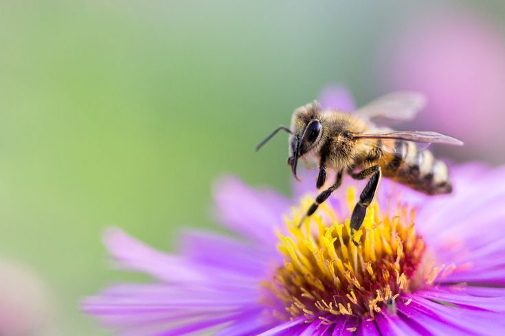 Fantastic bee friendly ideas for Spring