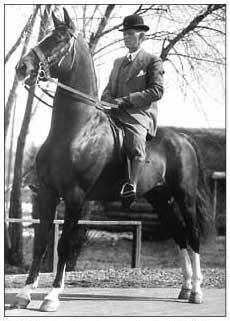 History of the Saddlebred