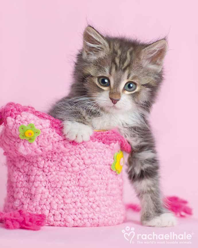 Opal (Domestic) - Every princess needs a pink handbag  (pic by Rachael Hale)
