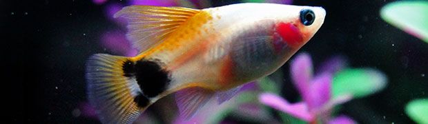 Best Freshwater Aquarium Fish For Beginners So You Have