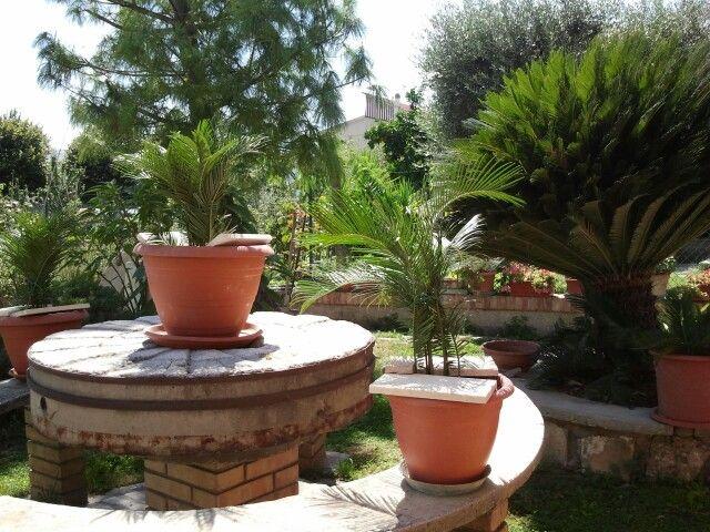 my garden ...Ascoli  Piceno Italy